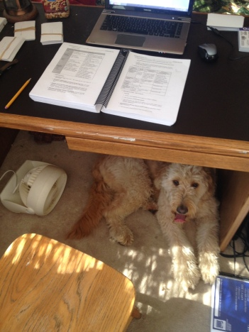 What? I'm helping dad study for the bar!